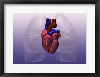 Close-up of a human heart model Framed Print
