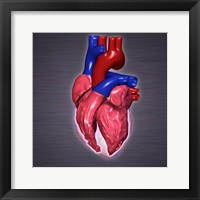 Close-up of a human heart Framed Print