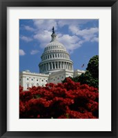 Framed Flowering plants in front of the Capitol Building, Washington, D.C., USA