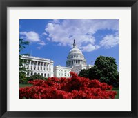 Flowering plants in front of the Capitol Building, Washington, D.C., USA Framed Print