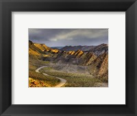 Cockscomb cottonwood Framed Print