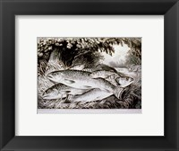 Framed American Brook Trout