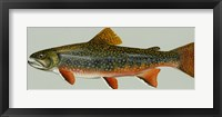 Framed Brook trout