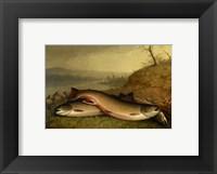 Framed Brooklyn Museum - Trout - Walter M. Brackett