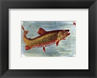 Framed Brook Trout American Fishes
