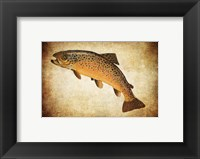 Framed Brown Trout II