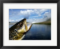 Framed Brown Trout and Soft Hackle Nymph