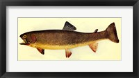 Framed Yellowstone cutthroat trout