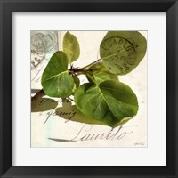 Framed Apple Leaf
