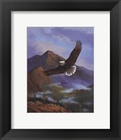 Framed Eagle Gliding