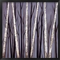 Framed Birch Shadows