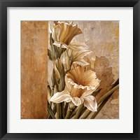 Framed Champagne Daffodils II