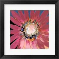 Sunshine Flower III Framed Print