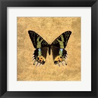 Butterfly on Gold Framed Print