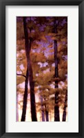 Framed Purple Wood II
