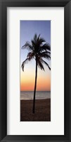 Single Palm II Framed Print
