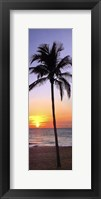 Framed Single Palm I
