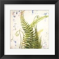 Framed Nice Ferns I