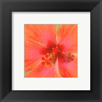 Framed New Hibiscus II