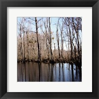 Among the trees II Framed Print