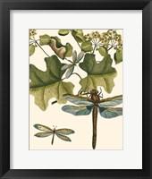 Framed Dragonfly Medley II
