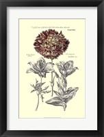 Tinted Floral IV Framed Print