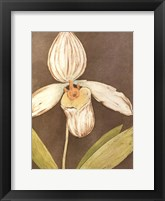 Orchid & Earth III Framed Print