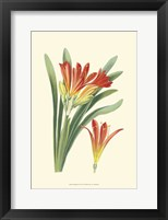 Framed Striking Lilies III