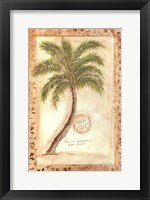 Framed Phoenix Date Palm