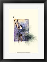 Nuthatch and Pine Framed Print
