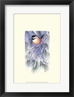 Framed Chickadee in White Pine