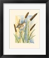 Framed Marsh Wren and Cattails