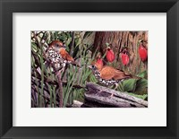 Framed Thrush