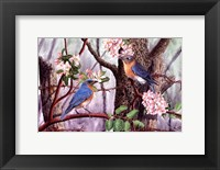 Framed Bluebirds
