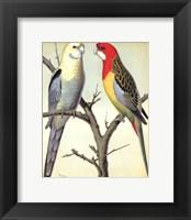 Framed Parrots I