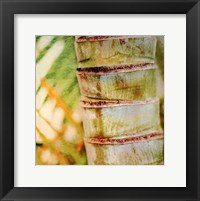 Tropical Texture II Framed Print