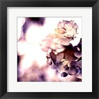 Framed Purple Dusk II
