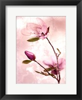 Framed Tulip Blush I