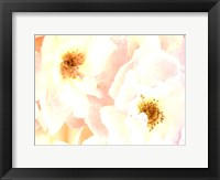Framed Rose Blush