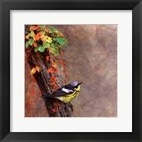 Framed Magnolia Warbler