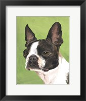 Dog Portrait-Boston Framed Print