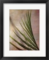 Elegant Frond I Framed Print