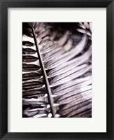 Framed Silvery Frond I
