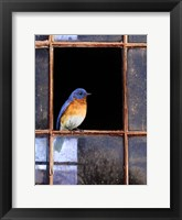 Framed Bluebird Window