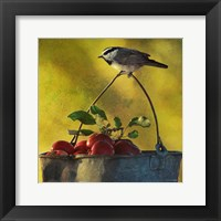 Apples & Chickadee Framed Print