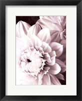 Framed B&W Dahlias I