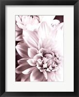 Framed B&W Dahlias II
