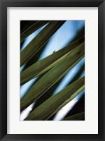 Framed Palma IV