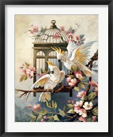 Framed Cockatoo and Blossoms