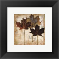 Framed Natural Leaves III